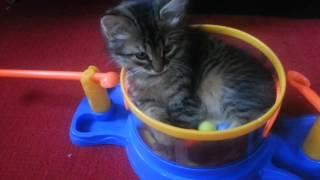 Ох уж эти шарики! Ох уж эти смешные коты!