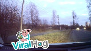 Schoolgirl Saved From Stray Dogs || ViralHog