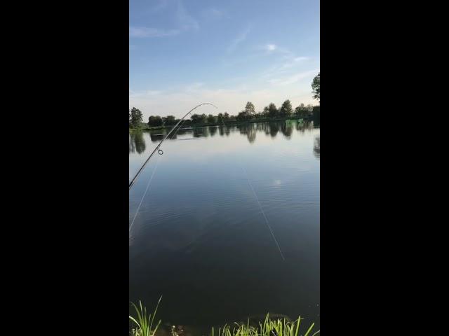 Ihmsen - Der Forellengott Forellensee Rosenweiher Schaut es euch an! Witziges Angelvideo! 😂😂😂