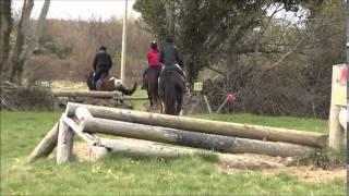 Heavy Irish Cob Jumps Cross Country
