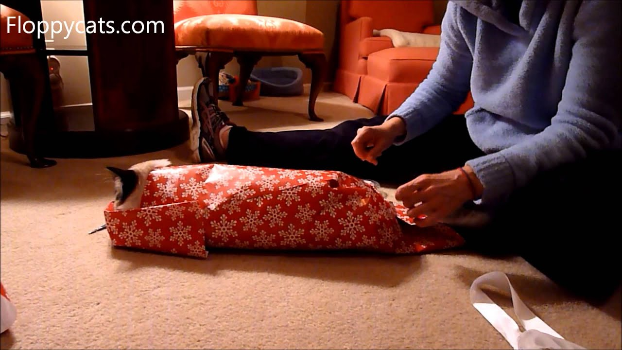 how to wrap a cat for christmas ragdoll cat gets christmas wrapped for christmas 2014 floppycats - How To Wrap A Cat For Christmas