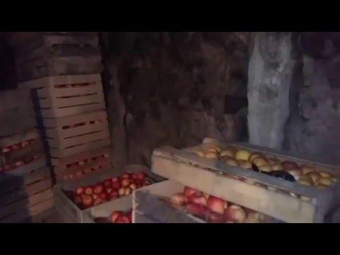 Яблоки Имидж, Мавка,Голд Раш, Хоней Крисп, Джонаголд ,Айдаред, Голден Делишес.