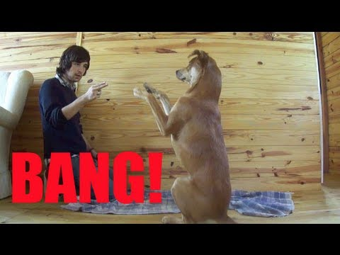 Como ensinar seu cachorro a fingir de morto - Adestramento Positivo - Dog Training