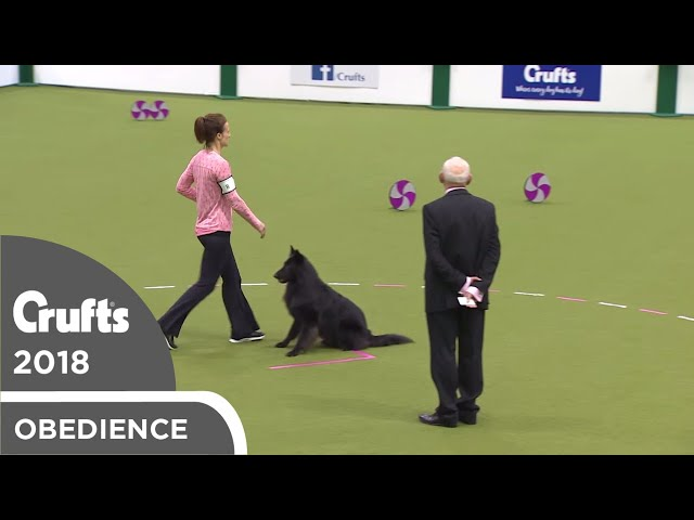 Obedience - Bitch Championship - Part 8 | Crufts 2018