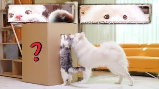 Dog And Cat Reaction To Giant Box