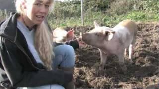 Danser med grise