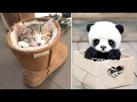 Baby Animals 🔴 Funny Cats and Dogs Videos Compilation (2020) Perros y Gatos Recopilación #8