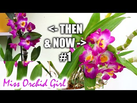 My Orchids Then & Now #1 - Results after years of care