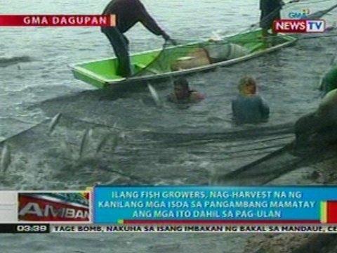 BP: Ilang fish growers sa Dagupan, nag-harvest ng mga isda sa pangambang mamatay ito