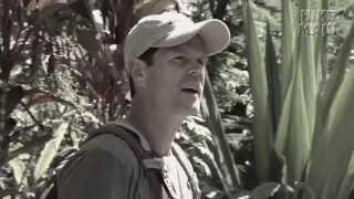 East Maui Waterfall & Rainforest Hike