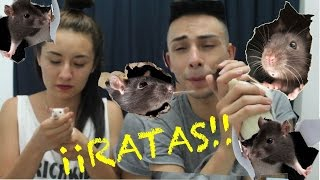 PLAGA DE RATAS   KICKLOVE