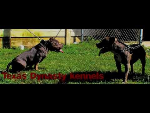 Texas dynasty kennels video