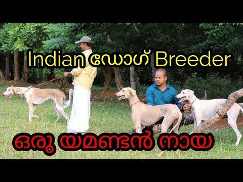 INDIAN DOGS BREEDER KERALA  | MALAYALAM | INFORMATION