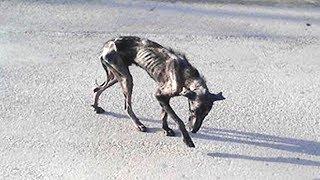 Alle wollten diesen traurigen Hund einschläfern, bevor das Unglaubliche passierte!