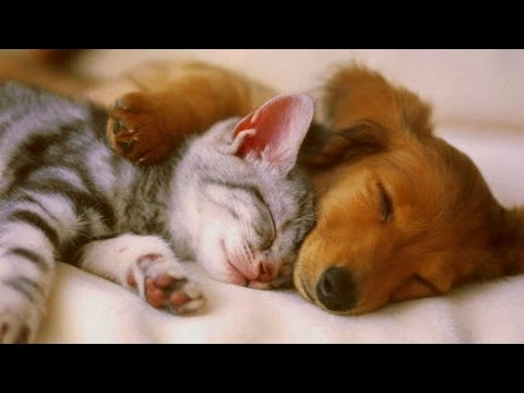 PET THERAPY For Cats and Dogs 2/2 -Relax, De-Stress, Reduces Anxiety - Sleep Music - 2 HOURS