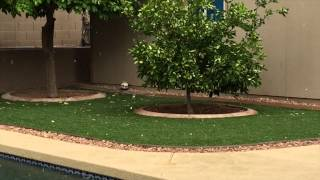 A brief hail storm in Goodyear, AZ - May 4, 2015