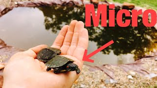 Video Newborn Pet TURTLES For The POND! download MP3, 3GP, MP4, WEBM, AVI, FLV Oktober 2018
