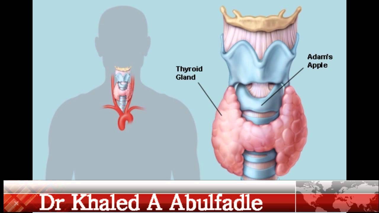 Thyroid Gland Physiology (10-2014) by Dr Khaled A Abulfadle - YouTube