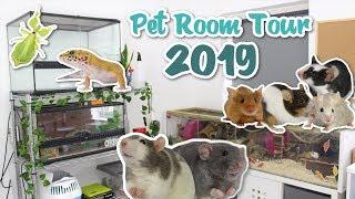 PET ROOM TOUR 2019