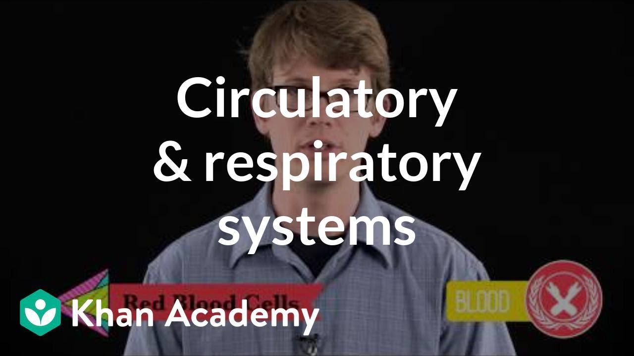 hight resolution of Circulatory \u0026 respiratory systems (video)   Khan Academy