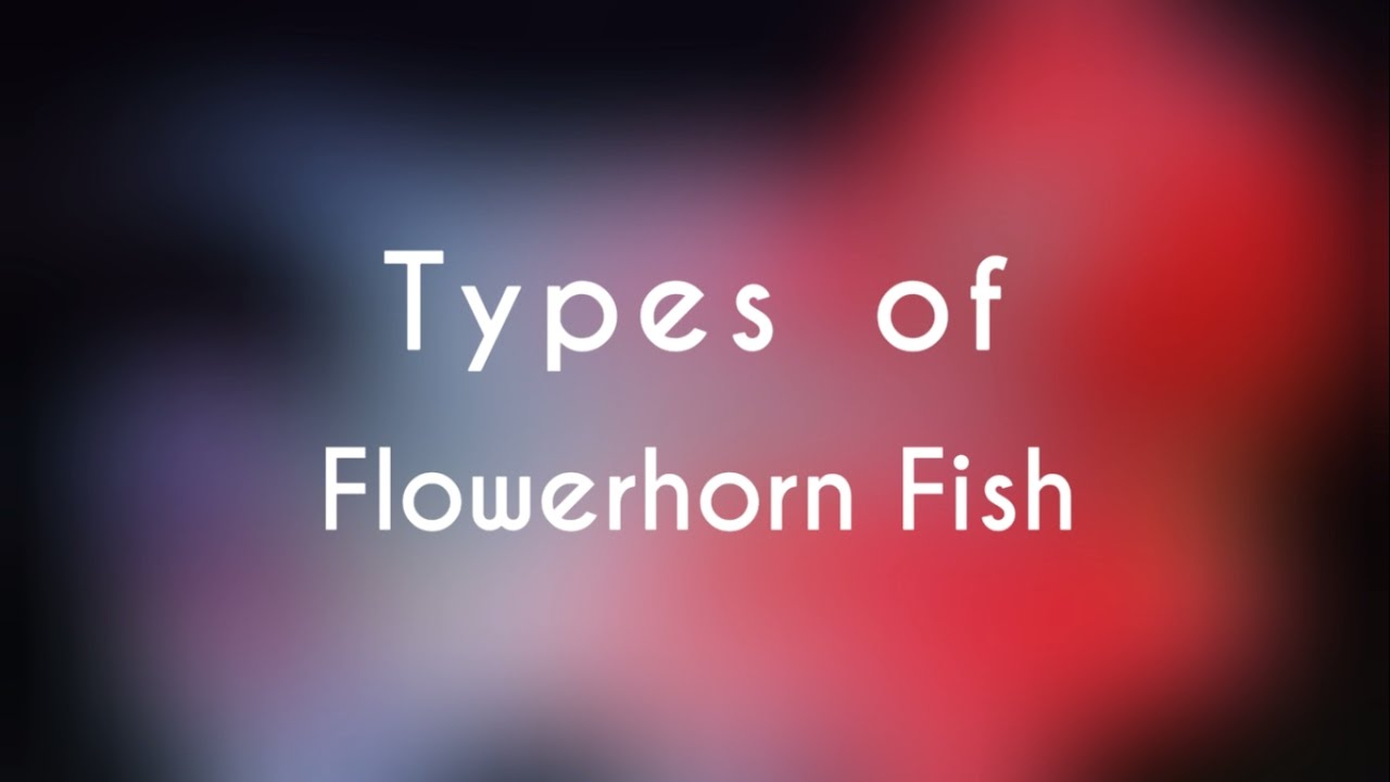 Types of Flowerhorn Fish - YouTube