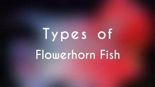 Types of Flowerhorn Fish