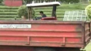 Dairy Farm Activities JMercado part1