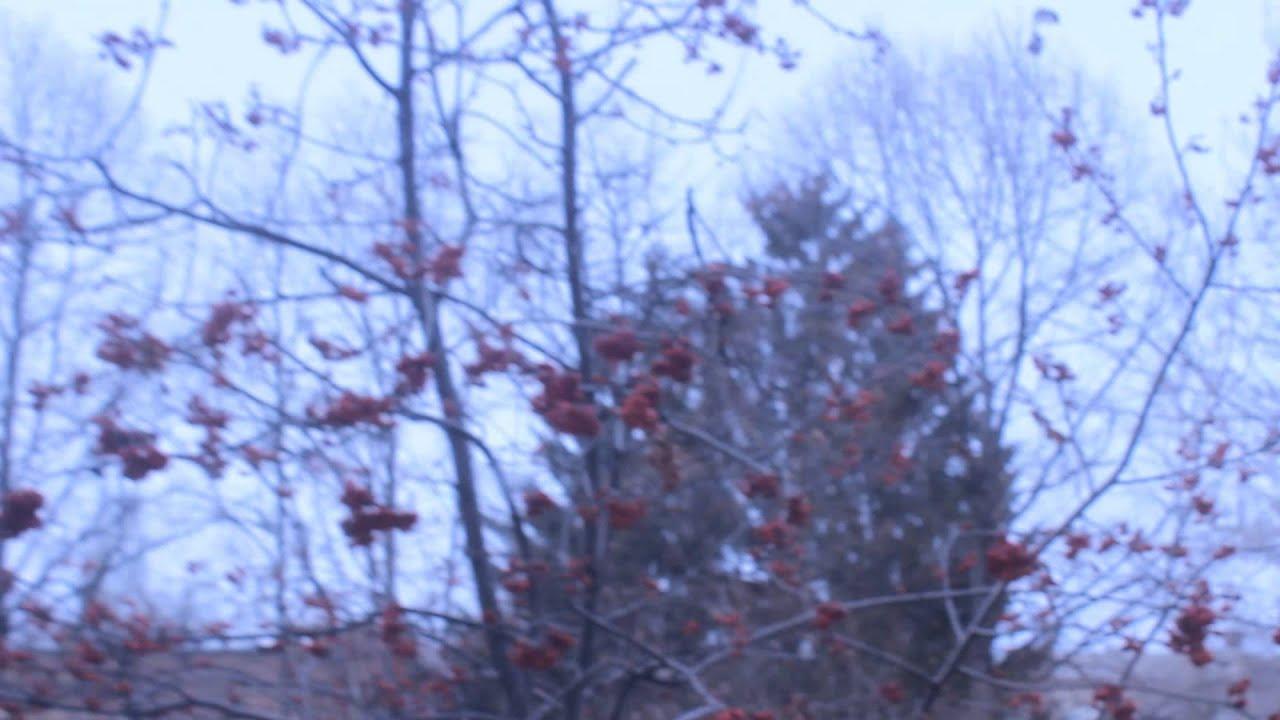 рябина фото зимой