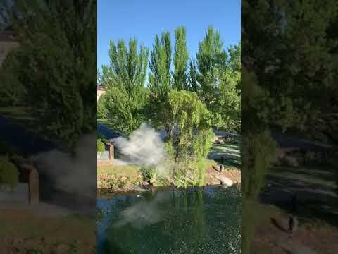 Provocan un pequeño incendio en Monforte al prender fuego a semillas de chopo