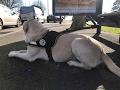 Présentation harnais pour chien guide