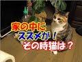 猫に壊されたウィンドウズ10の復讐- Funny Cat