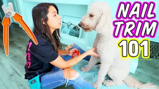 Are You Doing THIS When Clipping Dog Nails? � How To Cut Dog Nails