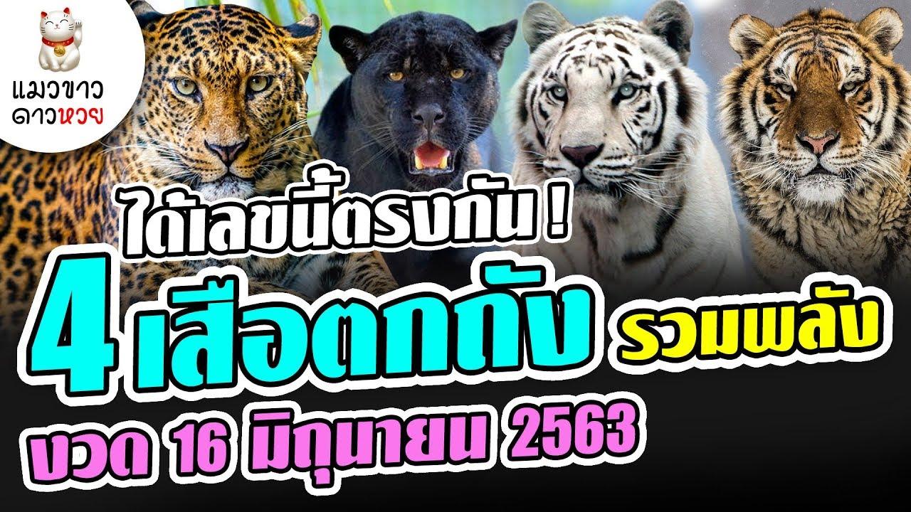 16/6/63 ได้เลขนี้ตรงกัน 4 เสือตกถังพลังเงินดี รวมพลัง หวยงวด 16 มิ.ย. 63 ( แมวขาว ดาวหวย )