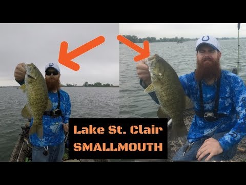 HUGE Lake St. Clair SMALLMOUTH! Part 2 (SWIMBAITS/NED RIG) (part 3 Link Below)