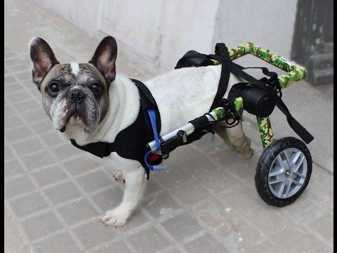 Una silla de ruedas para perro modelo camuflaje youtube for Sillas para perros