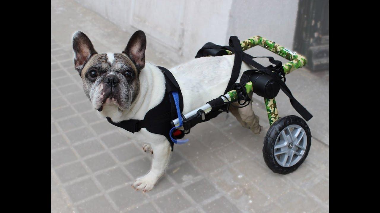 Una silla de ruedas para perro modelo camuflaje youtube - Ruedas para sillas de ruedas ...