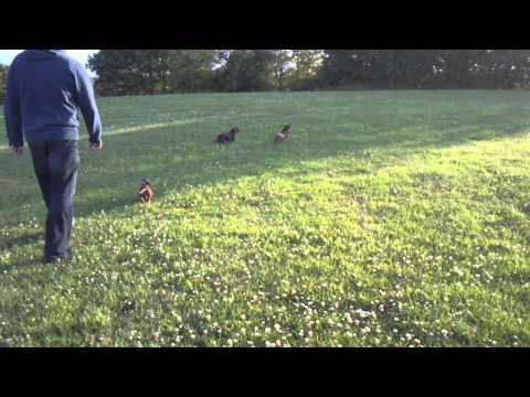 Doggies running aboot!