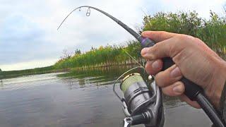 ДА СКОЛЬКО же ЩУКИ в этом БОЛОТЕ Рыбалка на попперы в пойме