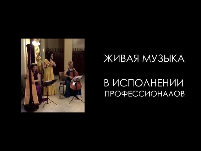 Трио MusicTime (живая музыка)