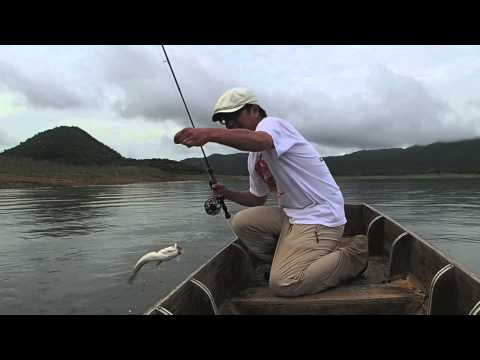 Fly Fishing Thailand With Bangkok Fishing Guide Service