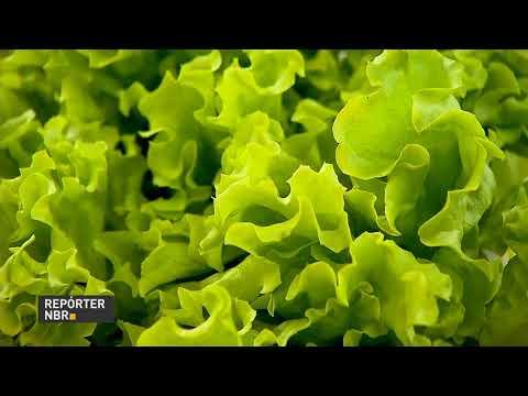 Hortaliças seguem mais baratas em setembro