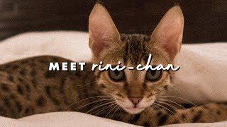 Zapętlaj MEET RINI-CHAN | Kalel