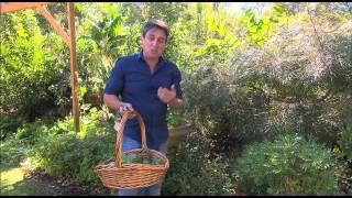 The Garden Gurus - Weeds you can eat