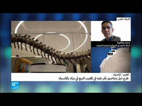 ذيل ديناصور عثر عليه في المغرب سيباع في مزاد بالمكسيك  - نشر قبل 6 ساعة