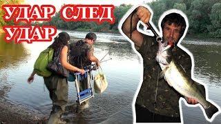 Риболов на Бяла Риба с Воблери на Марица Удар след Удар Spinning Fishing for Zander Walleye