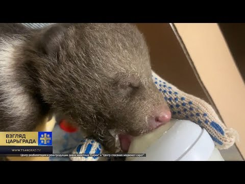 Спасенные ми-ми-мишки: тверские спасатели заменили родителей 246 медвежатам