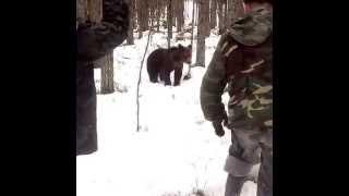 Встреча с медведем в тайге (Карелия, май 2015)(Встреча с медведем в тайге (Карелия, май 2015), 2015-06-11T15:41:26.000Z)