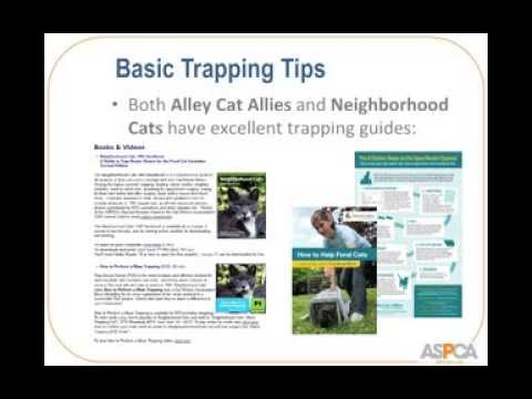 How to Start a Trap-Neuter-Return (TNR) Program in Your Community