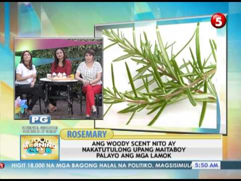 News5E |  PLANTS VS DENGUE LAMOK