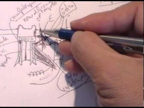 ANATOMIA 2.0: CRANEO: FOSAS EXTRACRANEALES - YouTube